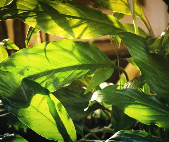 Dicas de cultivo e cuidados com as plantas