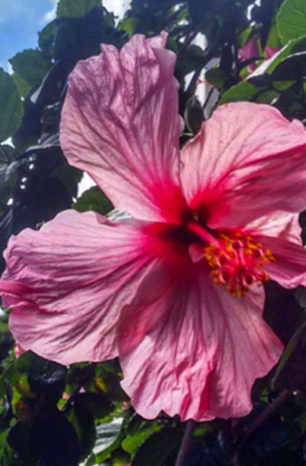 PANC no jardim: beleza com sabor!