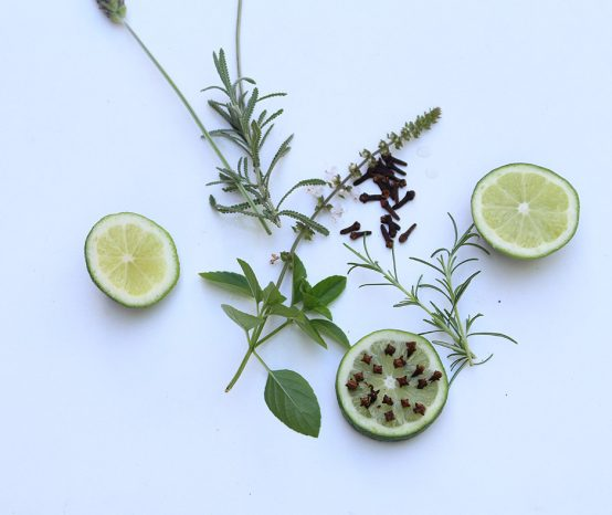 Plantas repelentes